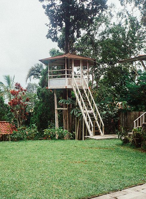 domek na drzewie w ogrodzie tropikalnym