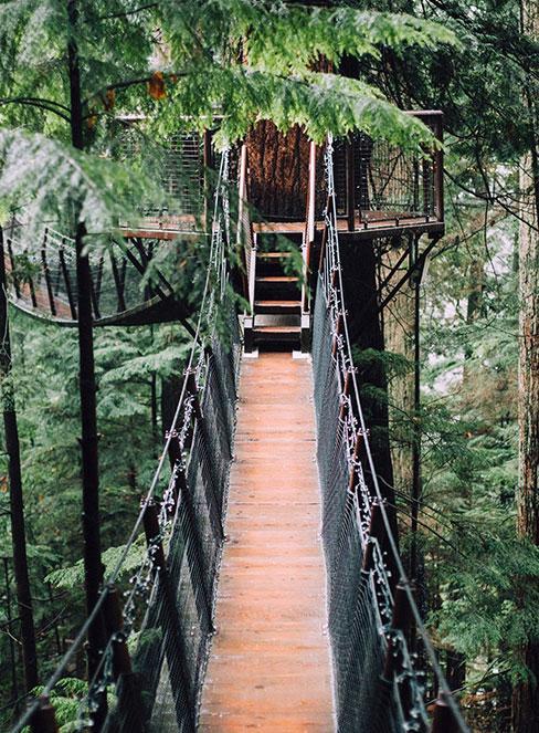 most wiszący w domku na drzewie w lesie