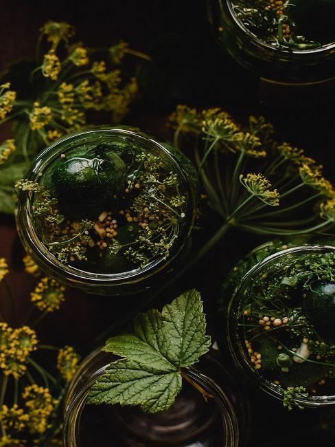 Jak zrobić ogórki kiszone - słoiki z ogórkami kiszonymi