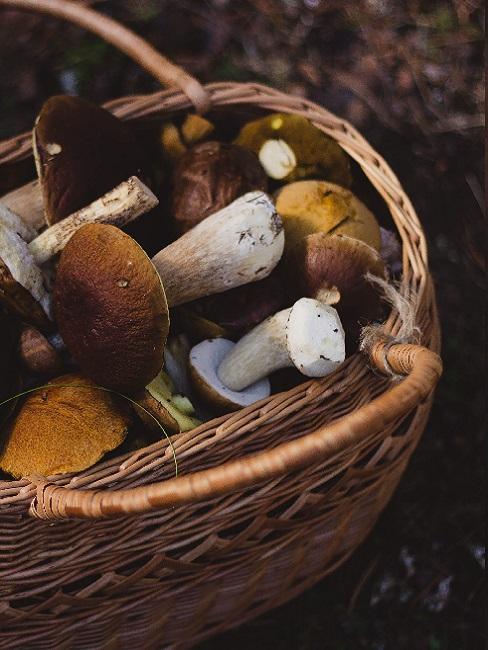 Koszyk wiklinowy pełen grzybów