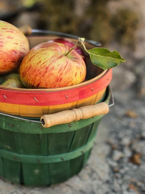 Jabłka w wiadrze