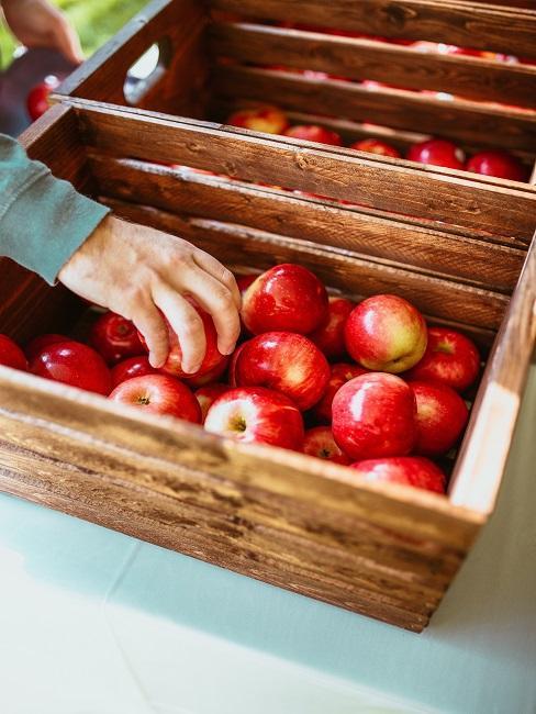 Skrzynie pełne czerwonych jabłek