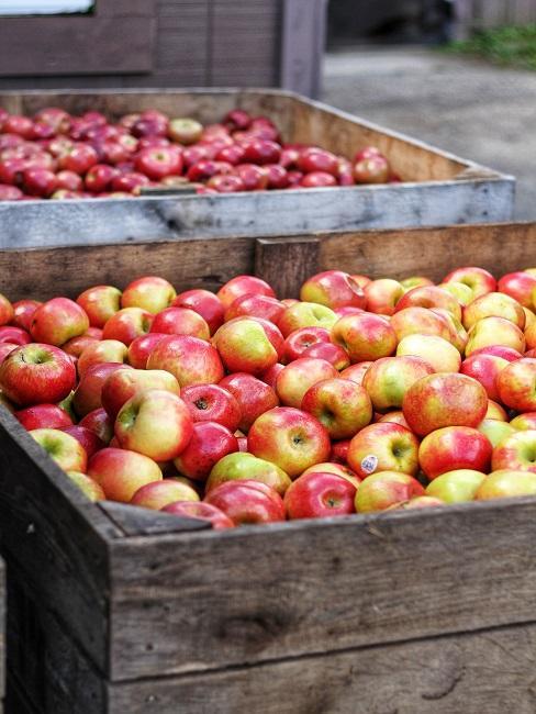 Skrzynie pełne jabłek