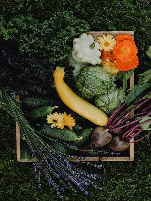 Cukinia leżąca w skrzynce z innym warzywami