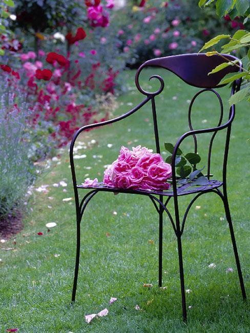 metalowe krzesło z różami w ogrodzie francuskim