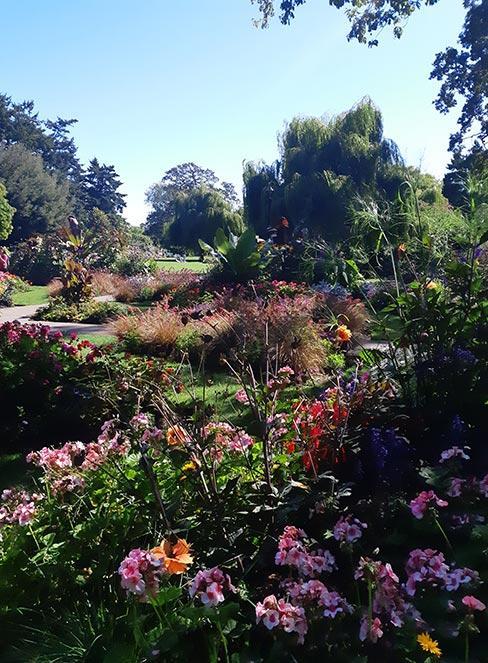 ogród angielski z bujnymi kwiatami