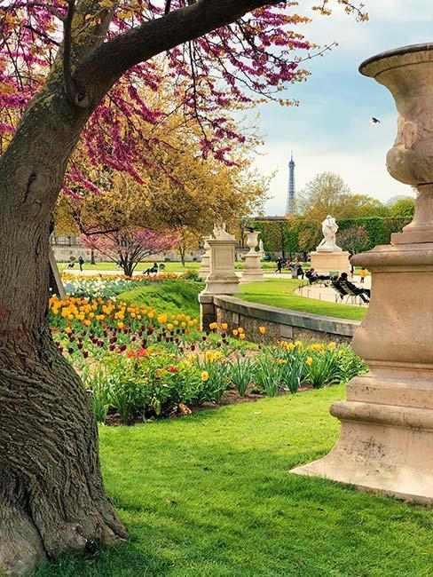 ogród francuski z wieżą Eiffla w tle