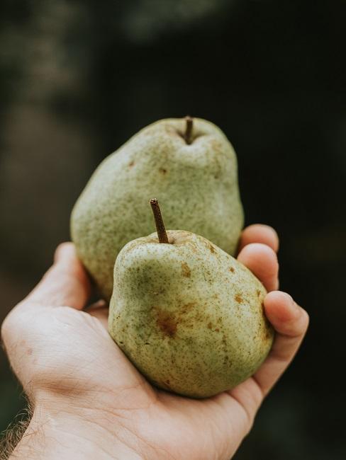 Dwie gruszki w dłoni