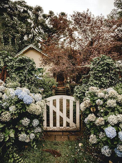 furtka do wiejskiego ogrodu z białymi kwiatami wokół