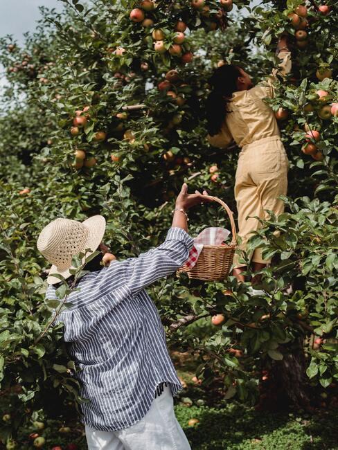 kobiety zbierające jabłka w sadzie