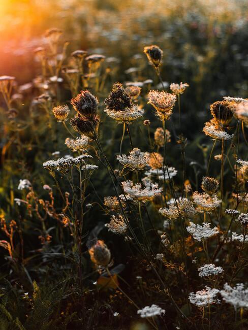 łąka pełna kwiatów o zachodzie słońca