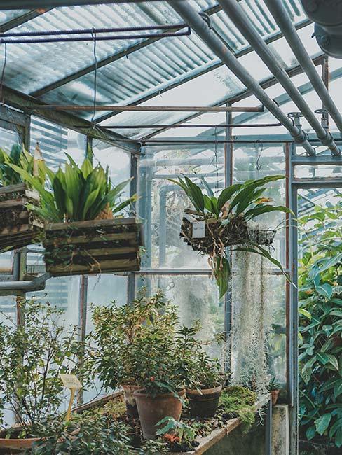 rośliny w skrzynkach w szklarni