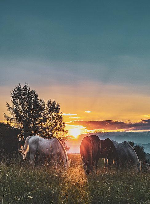 konie na łące podczas zachodu słońca