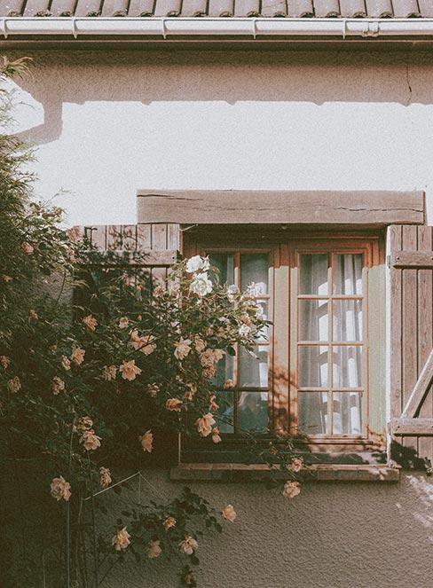 krzew róż pnących przy oknie z drewnianymi okiennicami