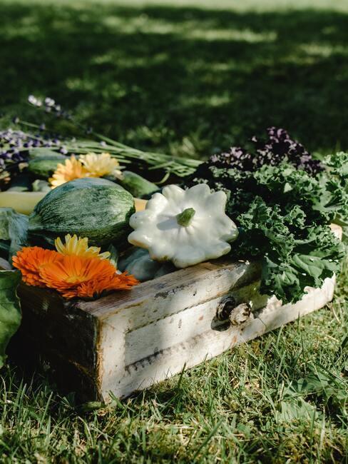 skrzynka pełna jesiennych warzyw: różnych odmian dyni