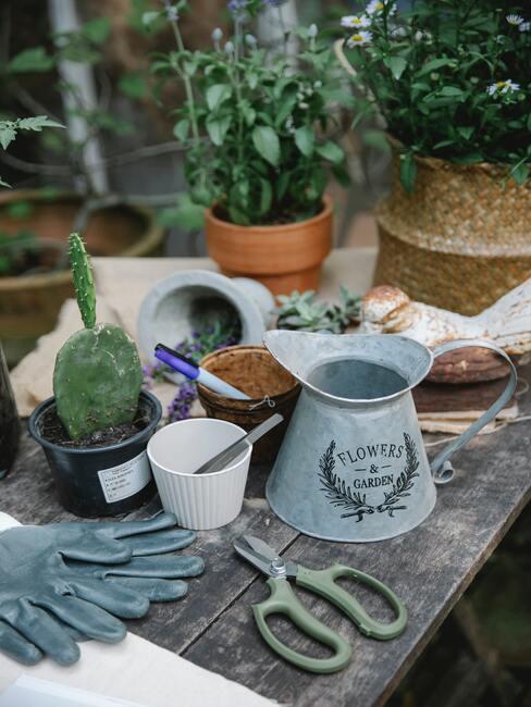 Małe roślinki, naczynie do podlewania i narzędzia ogrodnicze