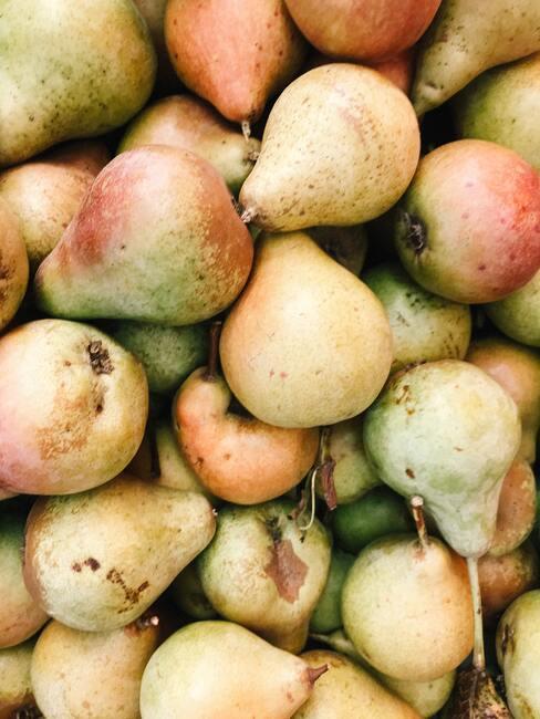 jesienne owoce: gruszki