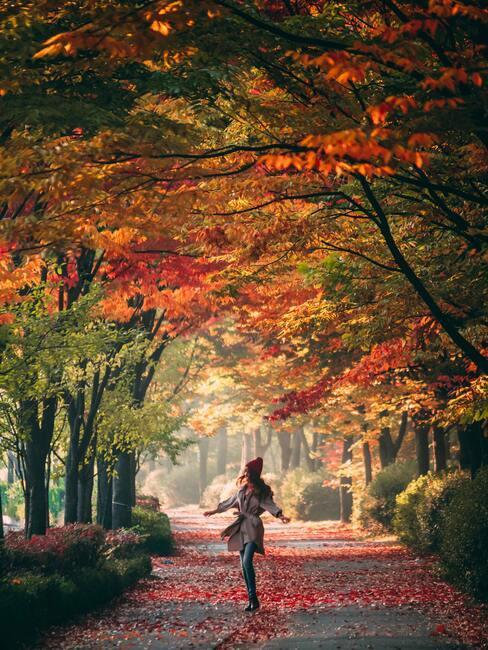 Kobieta spacerująca alejką z drzewami z kolorowymi liśćmi