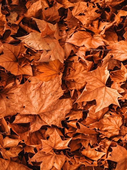 Liście w jesiennych kolorach