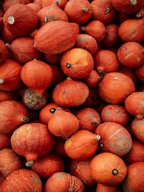 Dynie w kolorach jesieni