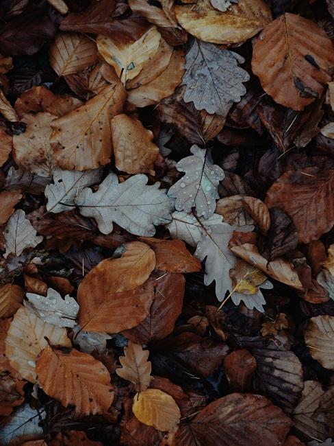 Liście jesienne na ziemi