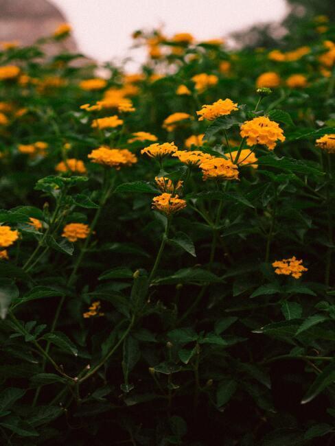 jesienne kwiaty w kolorach żółci