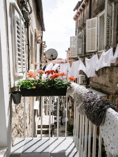 Balkon na którym w doniczce są czerwone pelargonie, w tle wywieszone jest na sznurku białe pranie