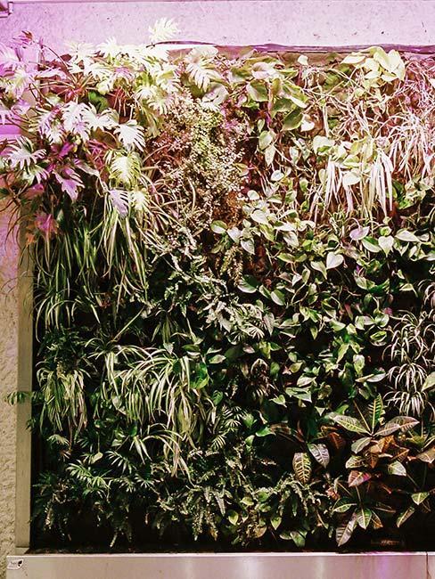 zielona ściana roślin w mieszkaniu