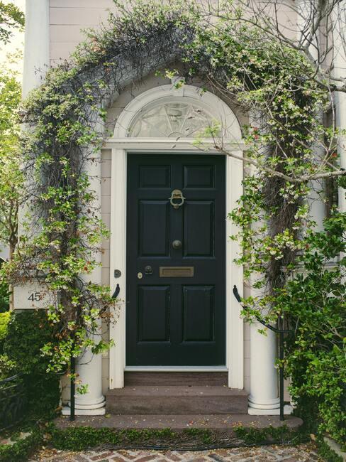 Odnowione drzwi wejściowe, pomalowane na ciemny kolor, wokół drzwi na białej ścianie pnąca się roślina