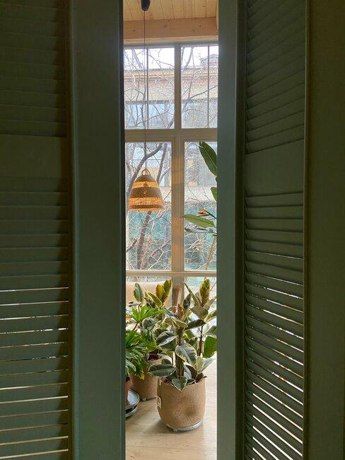 Zielone drzwi, a w tle roślinka