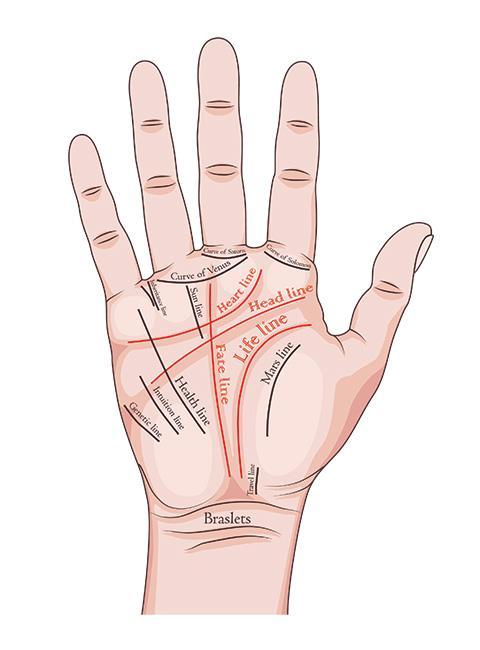 Grafika ukazująca linie papilarne na dłoni z opisami przydatne do wróżenia z ręki