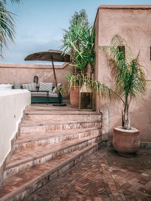 Kamienne schody z materiału pasującego do elewacji, obok duże donice z palmami