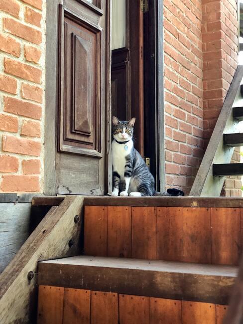 Kot siedzący na drewnianych schodach