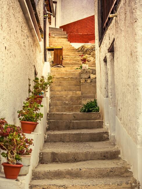 Betonowe schody, obok na ścianie pólka połączona z elewacją na której stoją rośliny