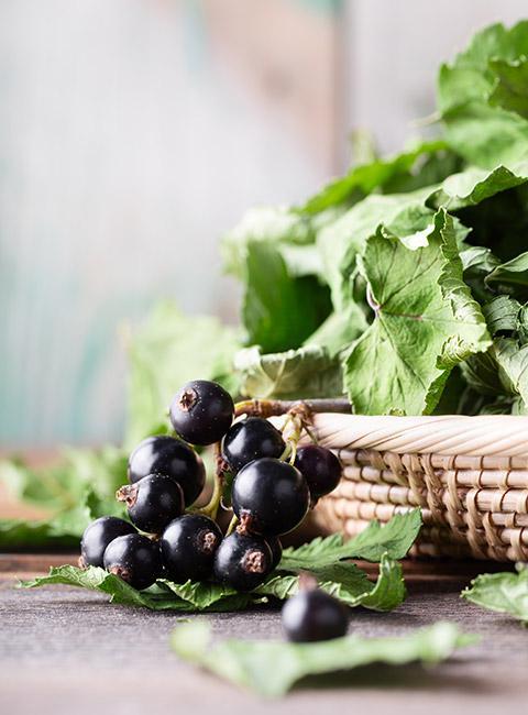 Zbliżenie na owoce czarnej porzeczki