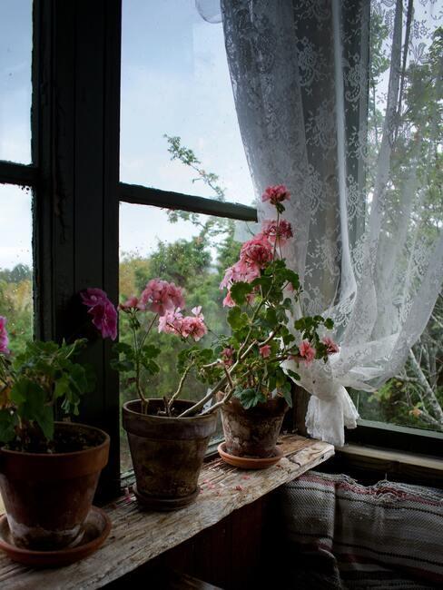 Kvety v okne