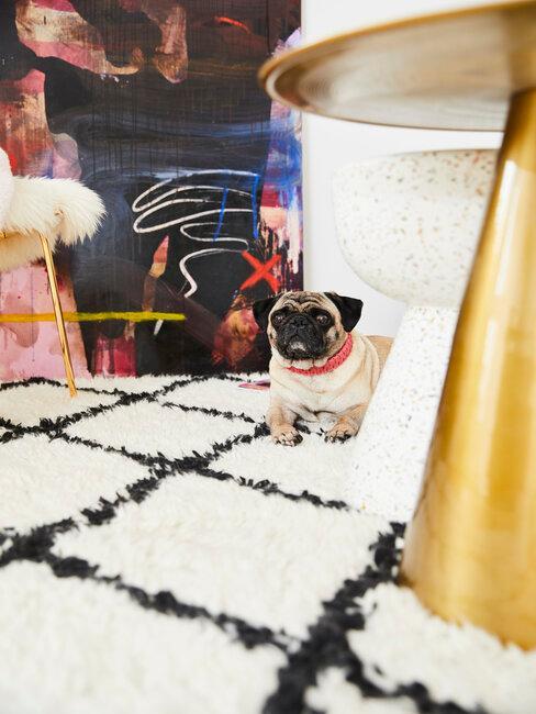 Ako vyčistiť koberec: domáce zvieratá