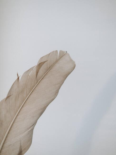 Tipy na čistenie peria