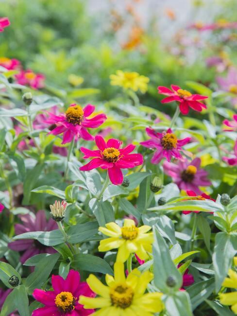 rôznofarebné kvety