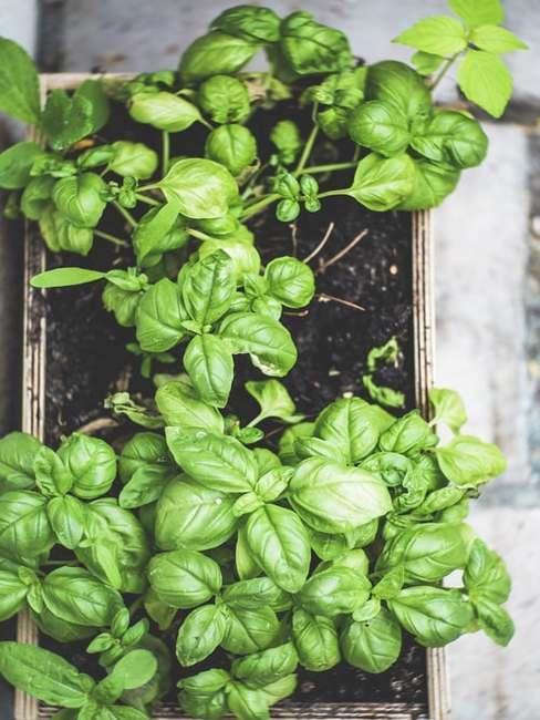 Rastliny v črepníku na malom balkóne