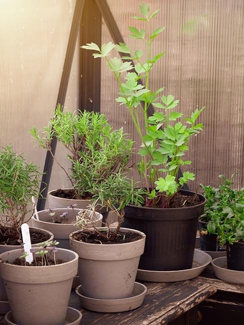 Rastliny a črepníky