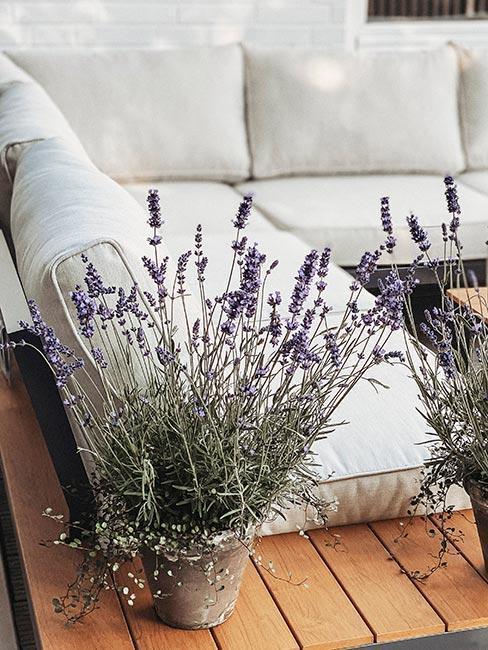kvety na terase