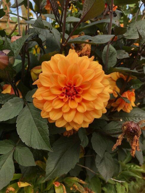 kvet v záhrade