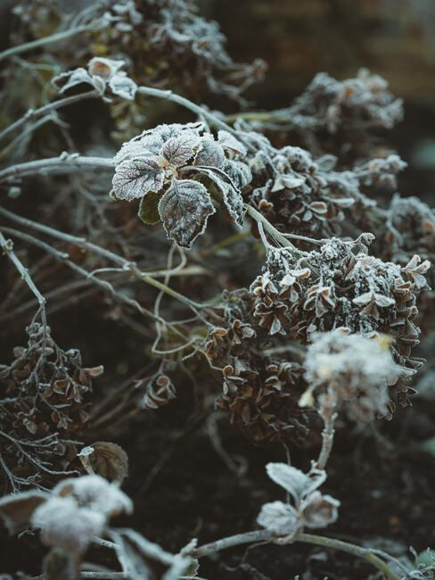 kvety a sneh