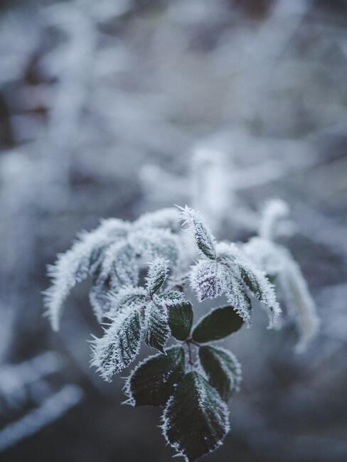 kvet v zimnej záhrade
