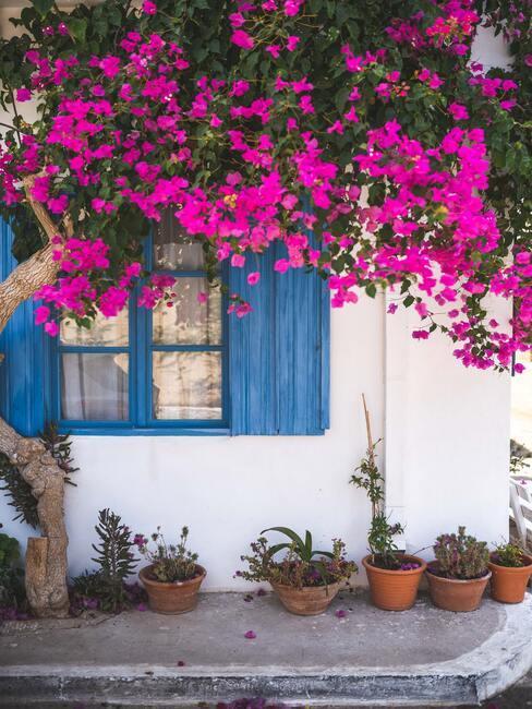 Vidiecke záhrady plné farebných kvetov