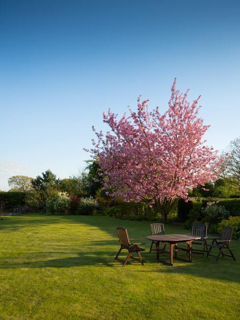 Vidiecke záhrady: rozkvitnuté stromy