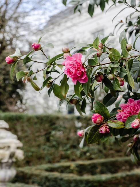 Okrasná záhrada s ružami