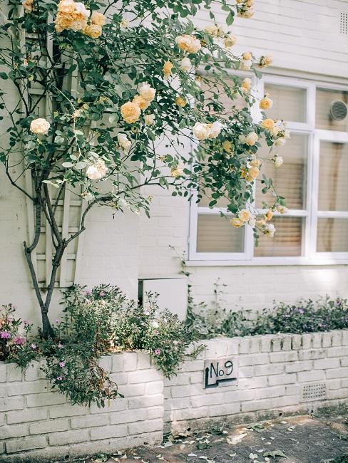 Predzáhradka s kvetinovým záhonom pod oknom