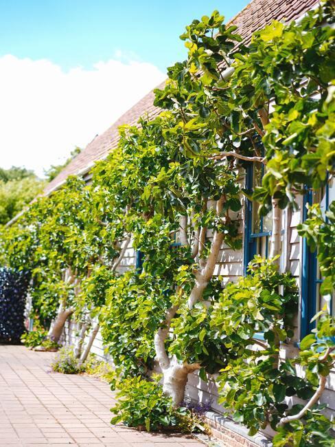 Bohatá zelená anglická záhrada